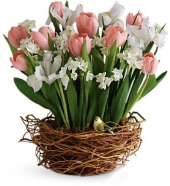 cos flori flora lux