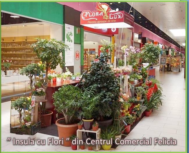 Contact Florarie Iasi Flora Lux