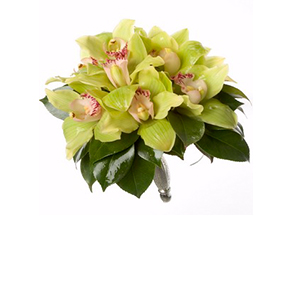 orhidee_florarie iasi