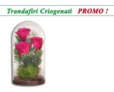 trandafiri criogenati trio roses