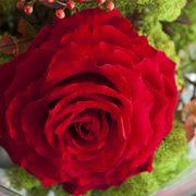 Aranjamente trandafiri criogenati 044-mic
