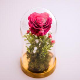 trandafiri-criogenati-rosu-in-cupola-2