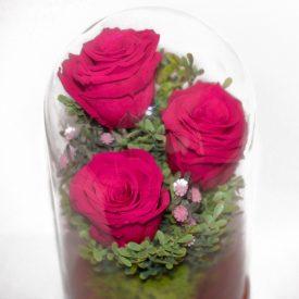 trandafiri-criogenati-trio-2