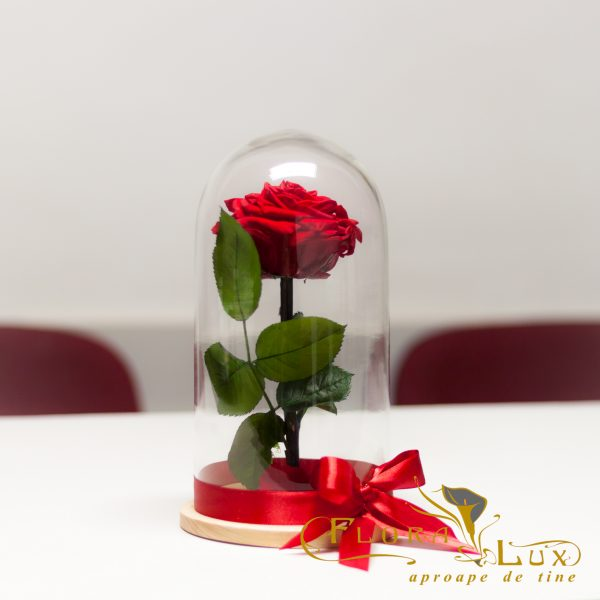 trandafir-criogenat-rosu