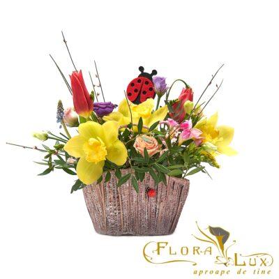 flori in poseta